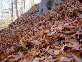 leaves-on-the-ground