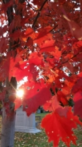 red-leaves